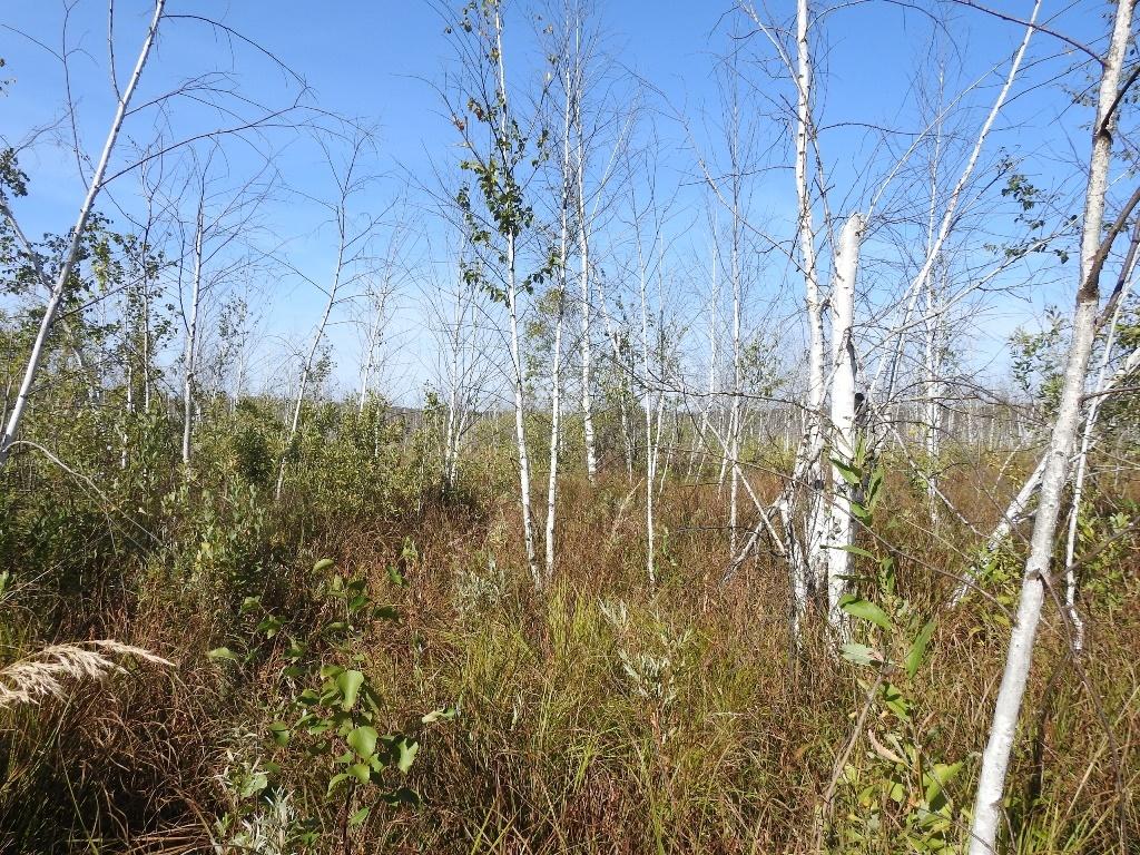 Урочище Моховое болото