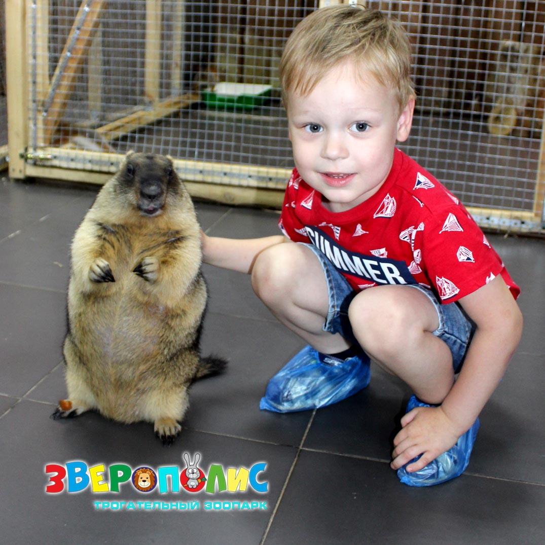 """Трогательный зоопарк """"Зверополис"""""""