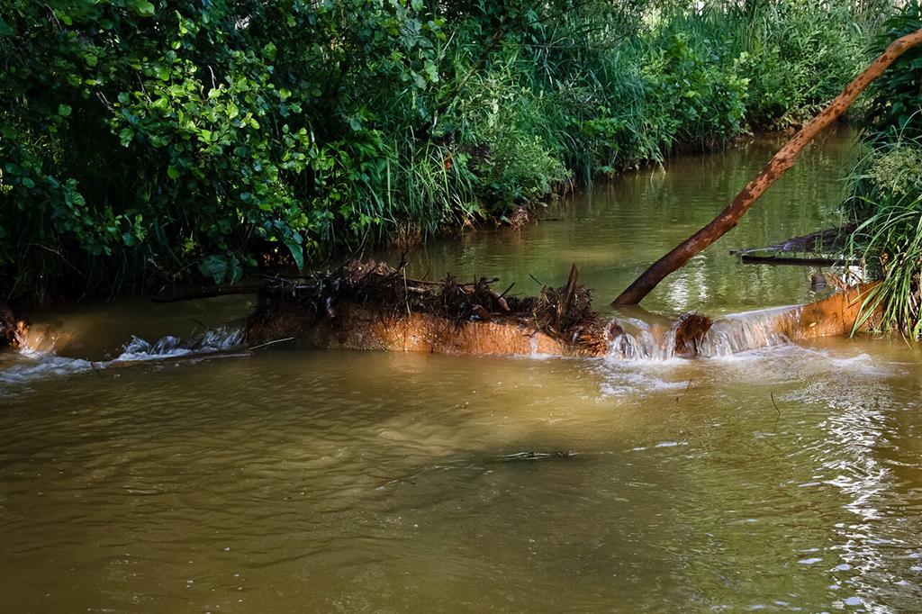 Река Соколка
