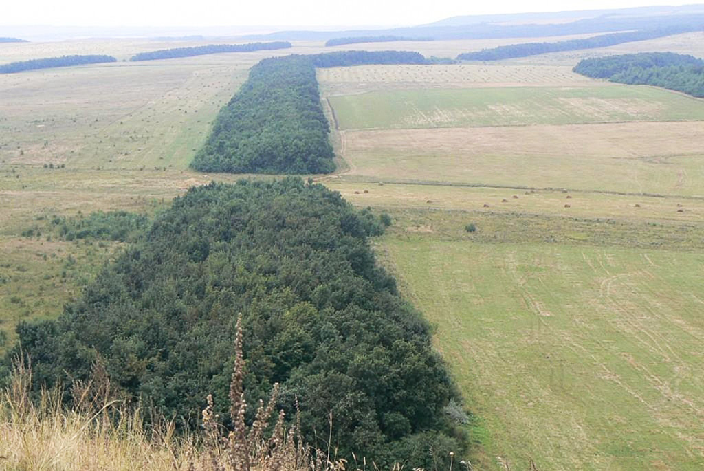 Государственная защитная лесополоса