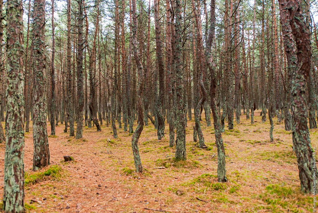 Ведьмин лес и поляна Шаманов