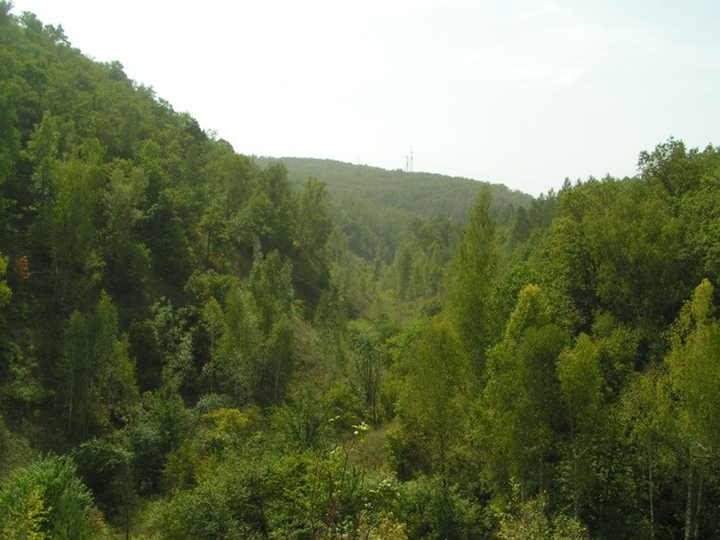 Долина стрелка