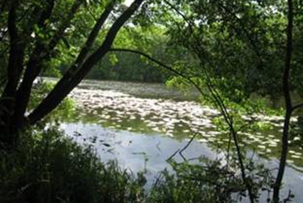 Озеро Лещёво