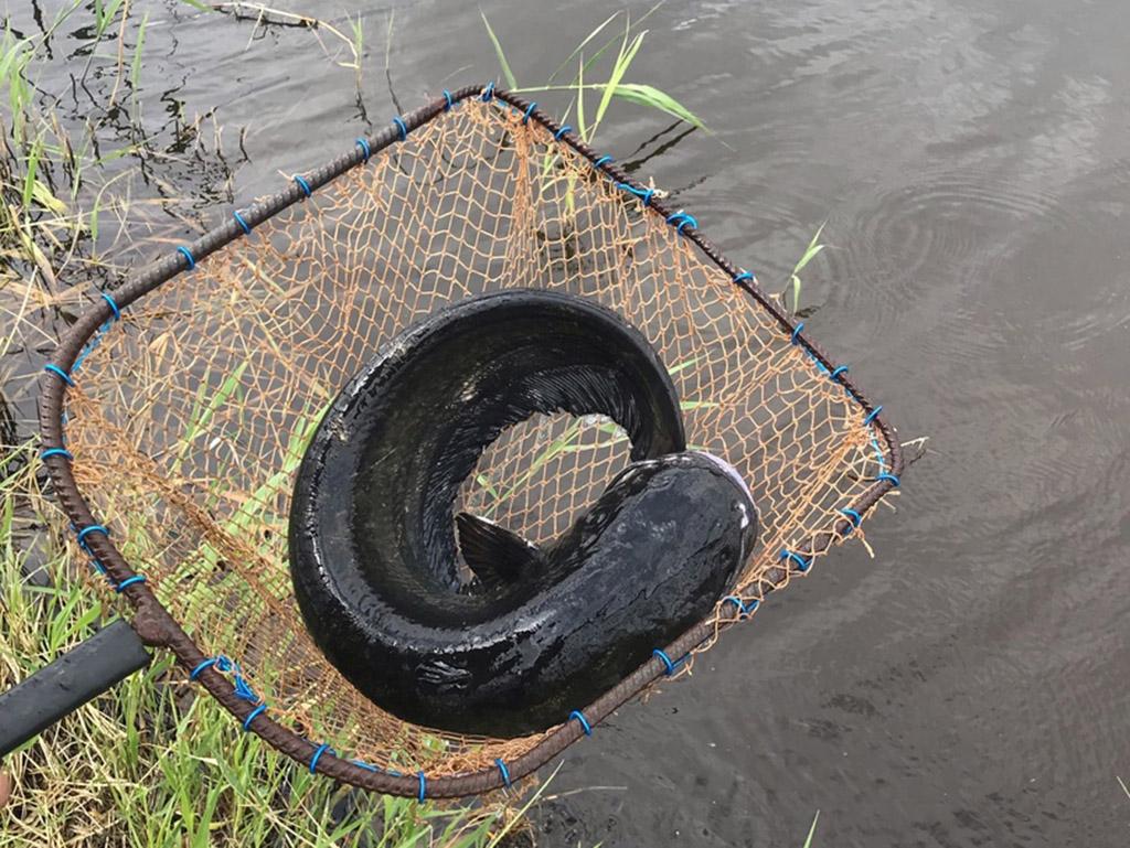 Радищевский пруд