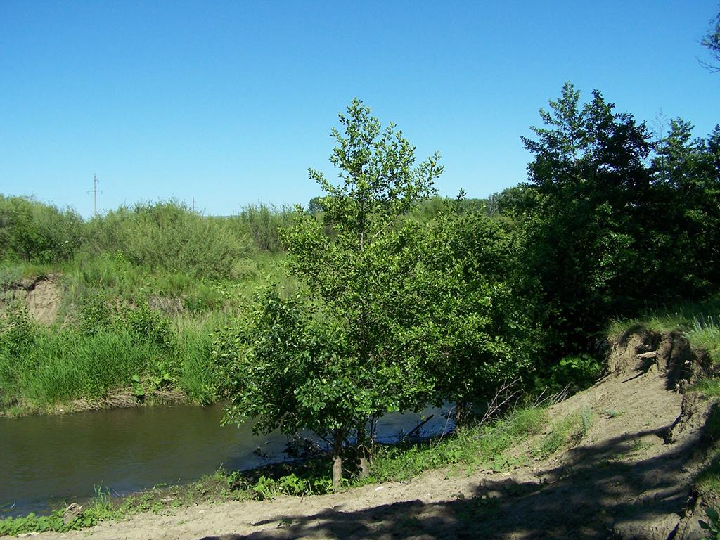Пляж на берегу реки Чардым