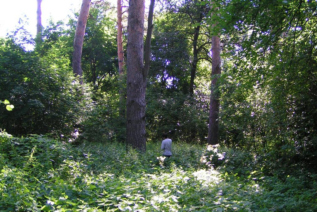 Лисичкинский приусадебный парк