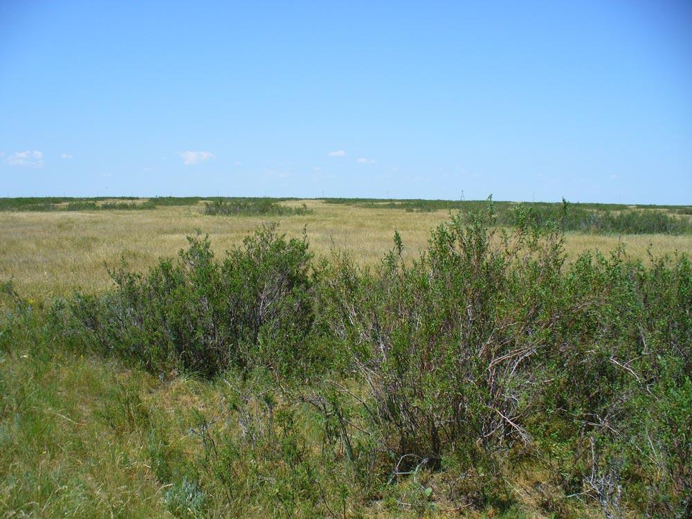 Ляляевская комплексная полупустыня