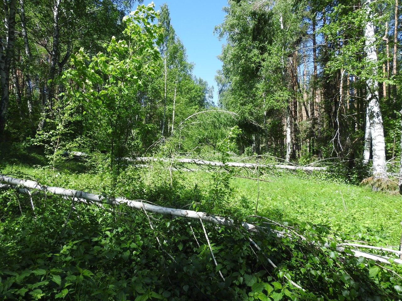 Участок с бореальной флорой в степной зоне