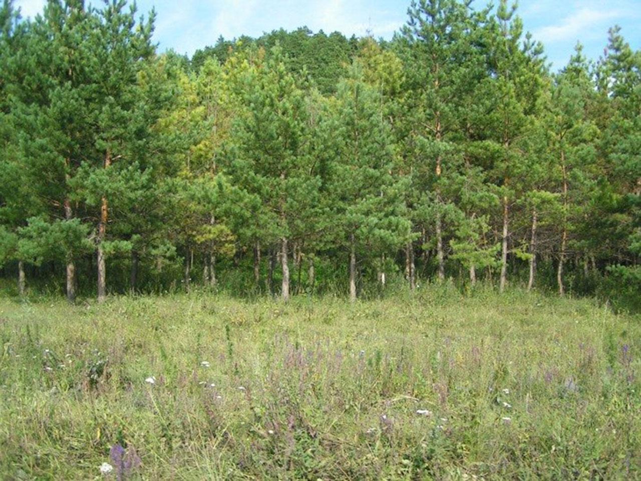 Меловые склоны с растениями-кальцефилами у с. Тепловка
