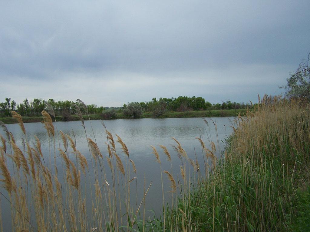 Готовицкий пруд
