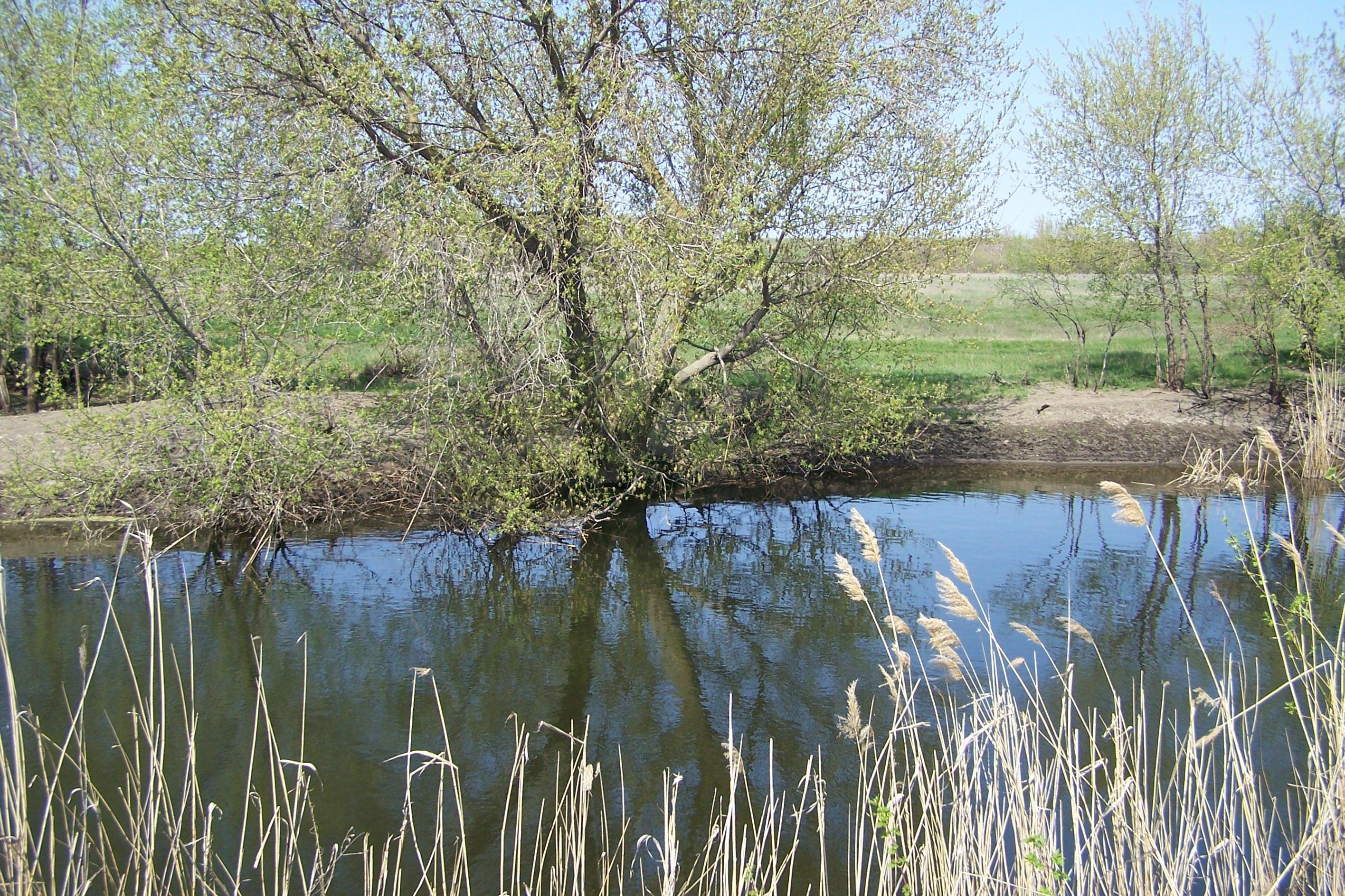Собачье озеро или Собачка