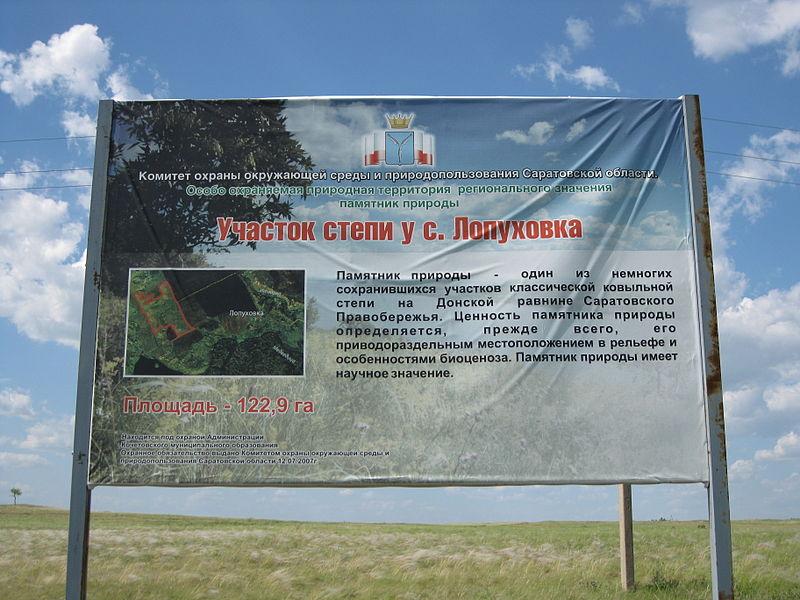 Участок ковыльной степи у с. Лопуховка