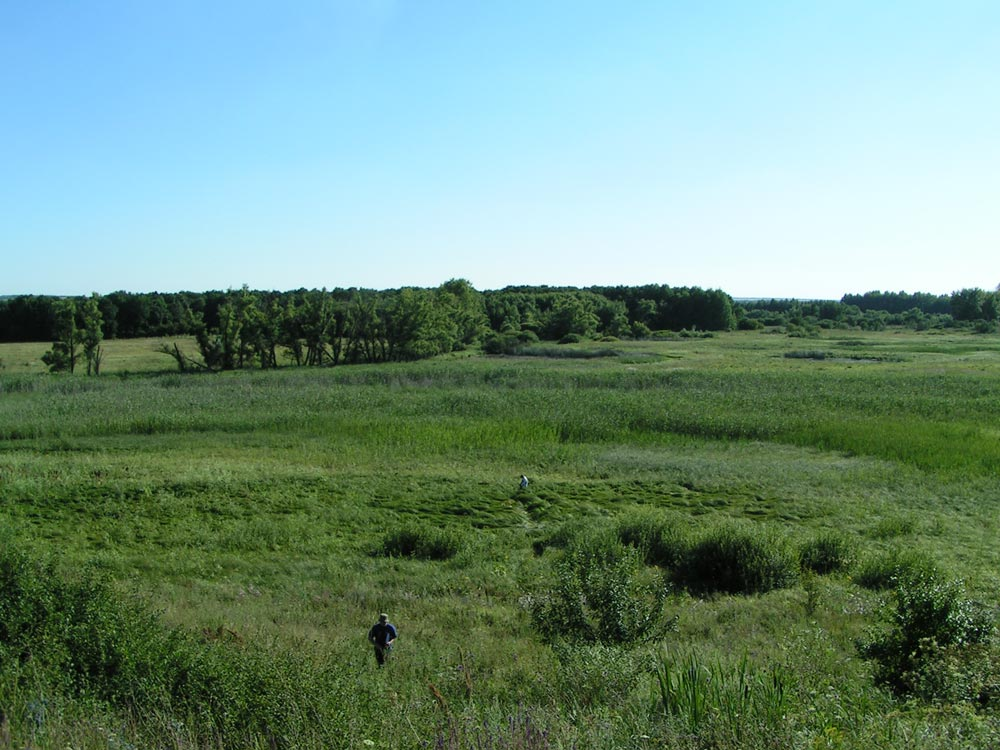 Рефугиум гигрофитов в долине р. Баланда