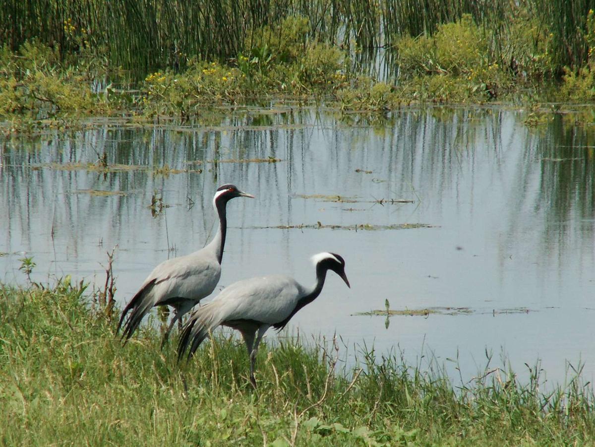 Государственный природный заказник «Саратовский»