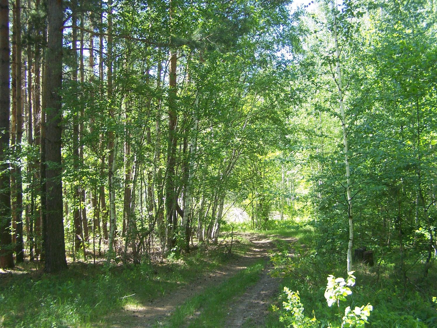 Алексеевский лес