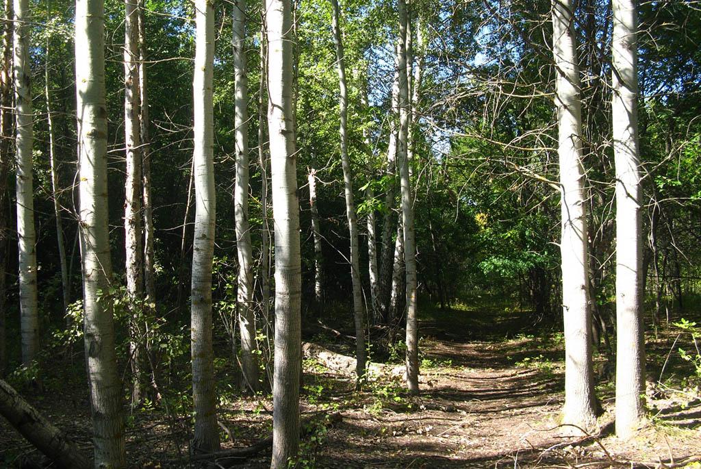 Ставский лес или лесопарк Тинь-Зинь