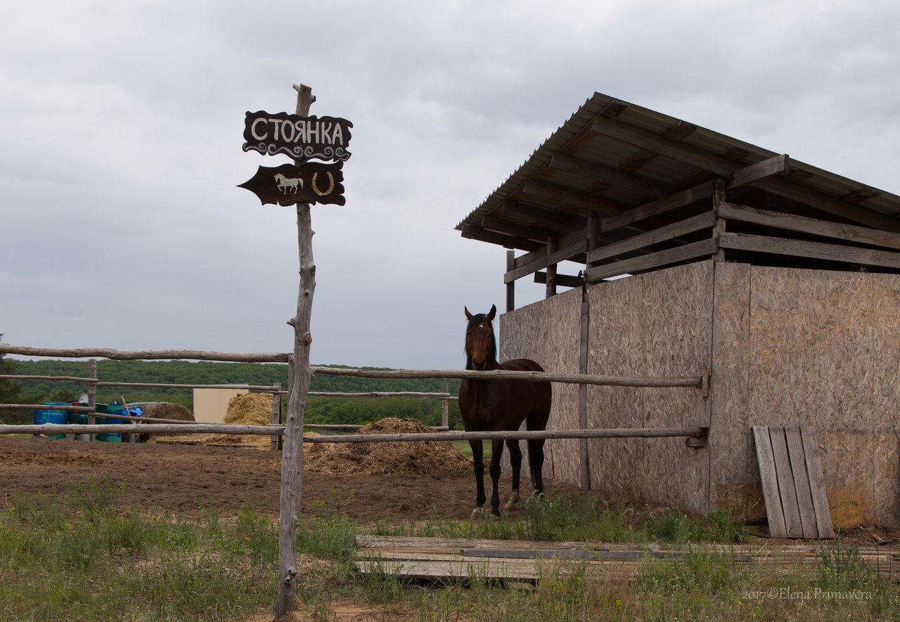 "Семейное хозяйство ""Добрая Лошадь"""