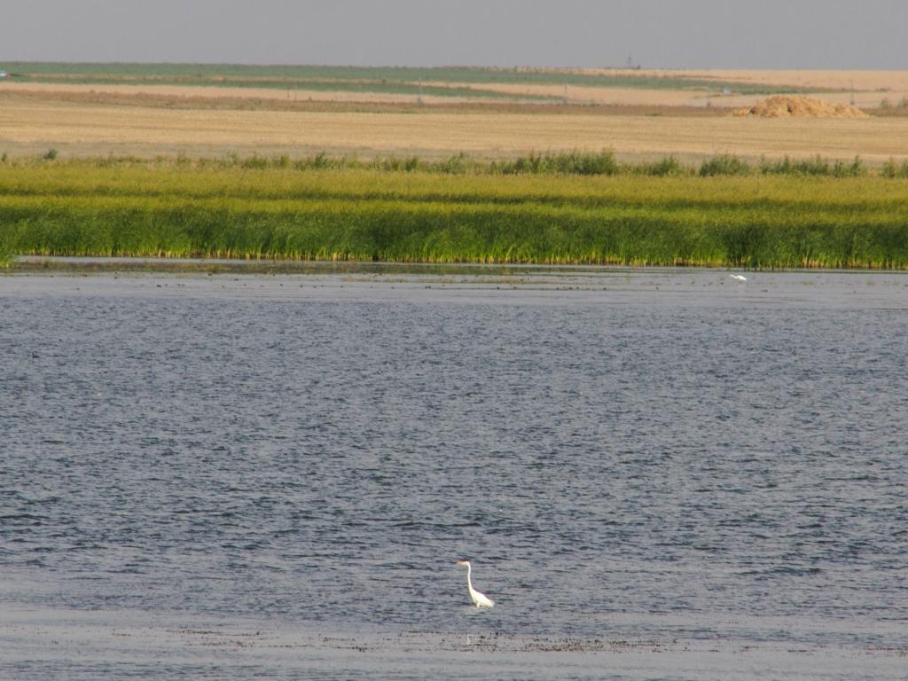 Лебедёвское водохранилище