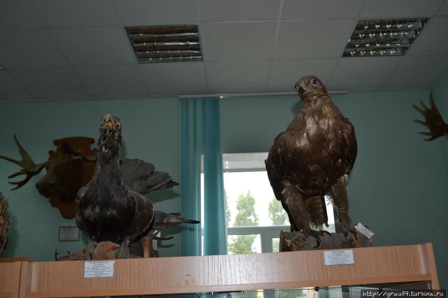Зооэнтомологический музей