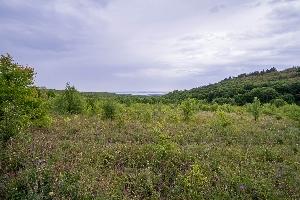 Леса Тепловского лесничества