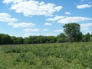 Большая Липовская поляна