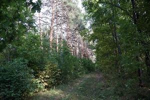 Старолопуховский приусадебный парк