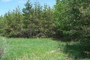 Первые лесопосадки над Голицыно