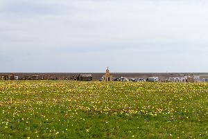 Фестиваль тюльпанов Куриловская степь