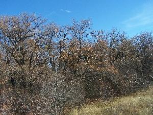 Алешкин лес осенью