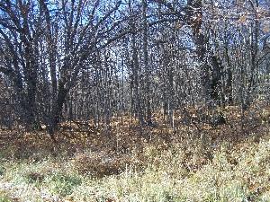 Осенний Тепловский лес